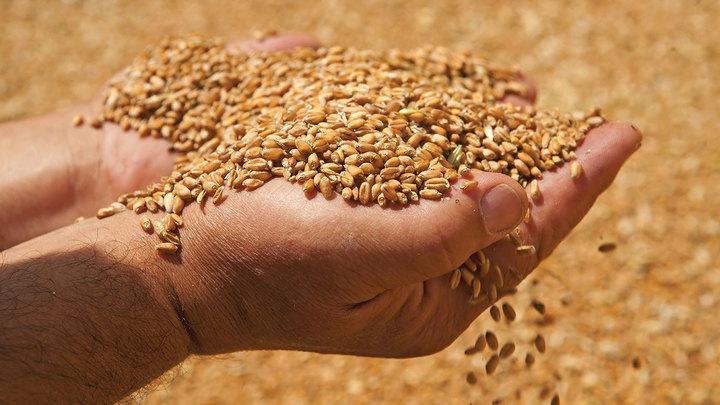 zachem rossiya priostanavlivaet prodazhu zerna